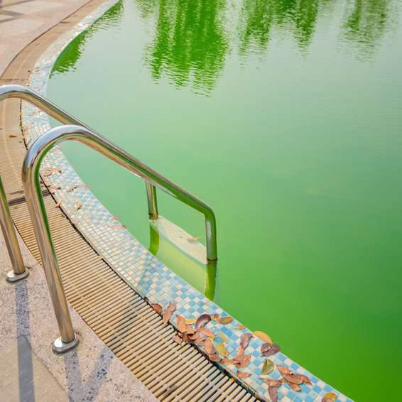 algen im schwimmbecken arten und wie sie zu bek mpfen sind poolsana der pool sauna. Black Bedroom Furniture Sets. Home Design Ideas