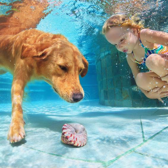 Poolspass mit dem Hund
